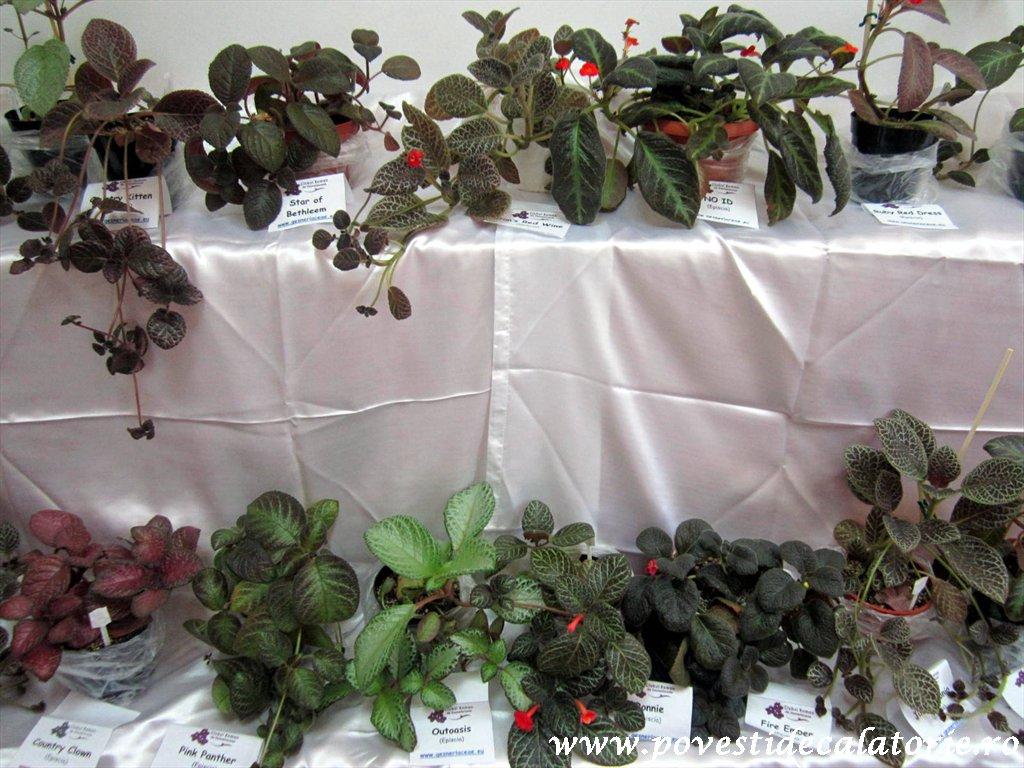Gradina Botanica Dimitrie Brandza Bucuresti (121)