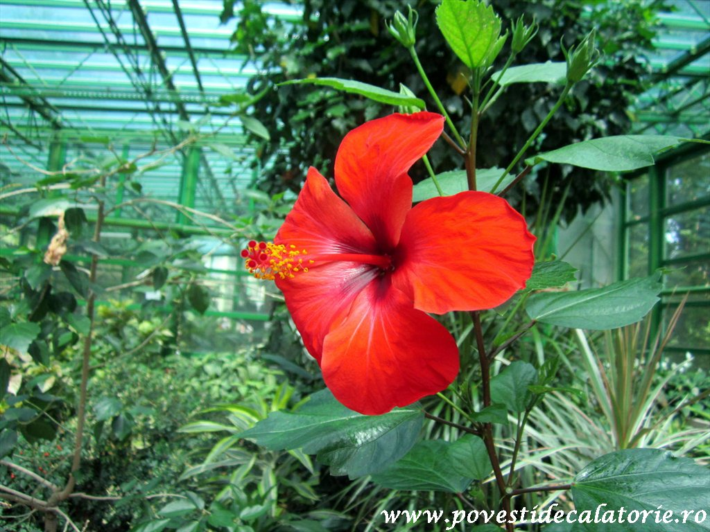 Gradina Botanica Dimitrie Brandza Bucuresti (32)