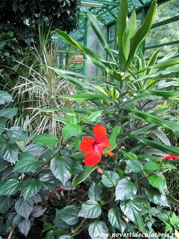 Gradina Botanica Dimitrie Brandza Bucuresti (40)