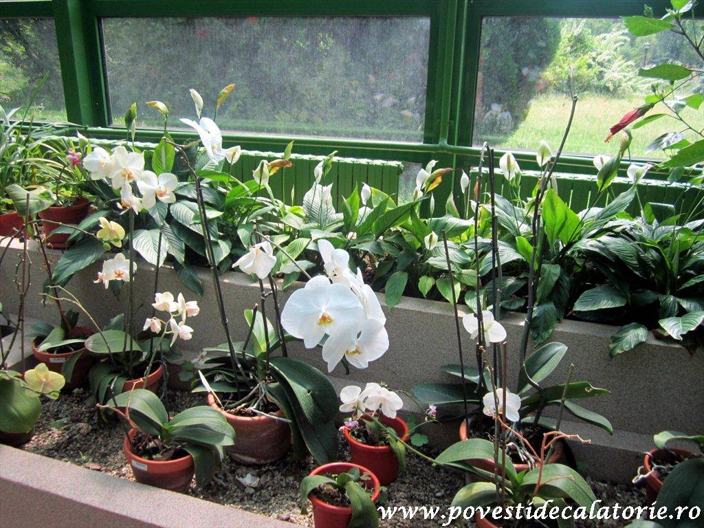 Gradina Botanica Dimitrie Brandza Bucuresti (45)