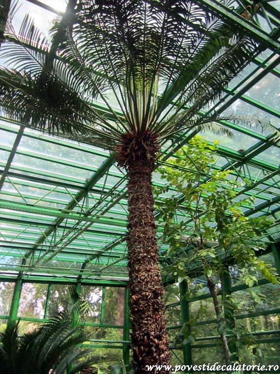 Gradina Botanica Dimitrie Brandza Bucuresti (55)