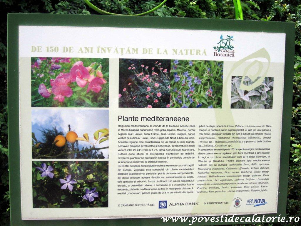 Gradina Botanica Dimitrie Brandza Bucuresti (9)