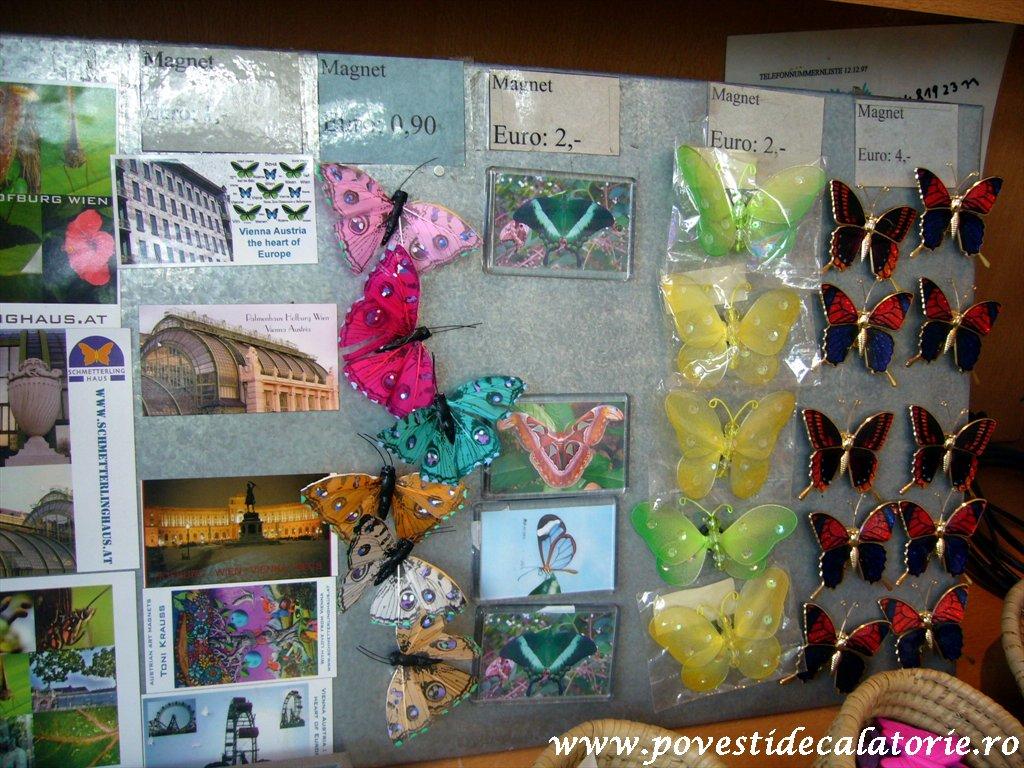 Muzeul Fluturilor Viena (1)