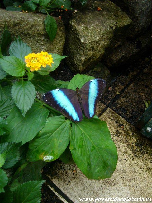 Muzeul Fluturilor Viena (10)