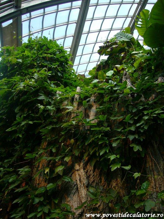 Muzeul Fluturilor Viena (13)