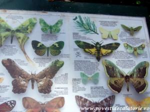 Muzeul Fluturilor Viena (26)