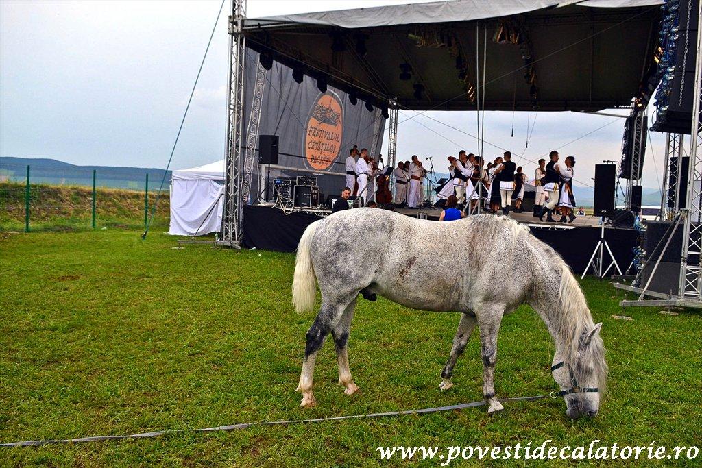 Festivalul Cetatilor Dacice din Cricau 2013 (73 of 82)