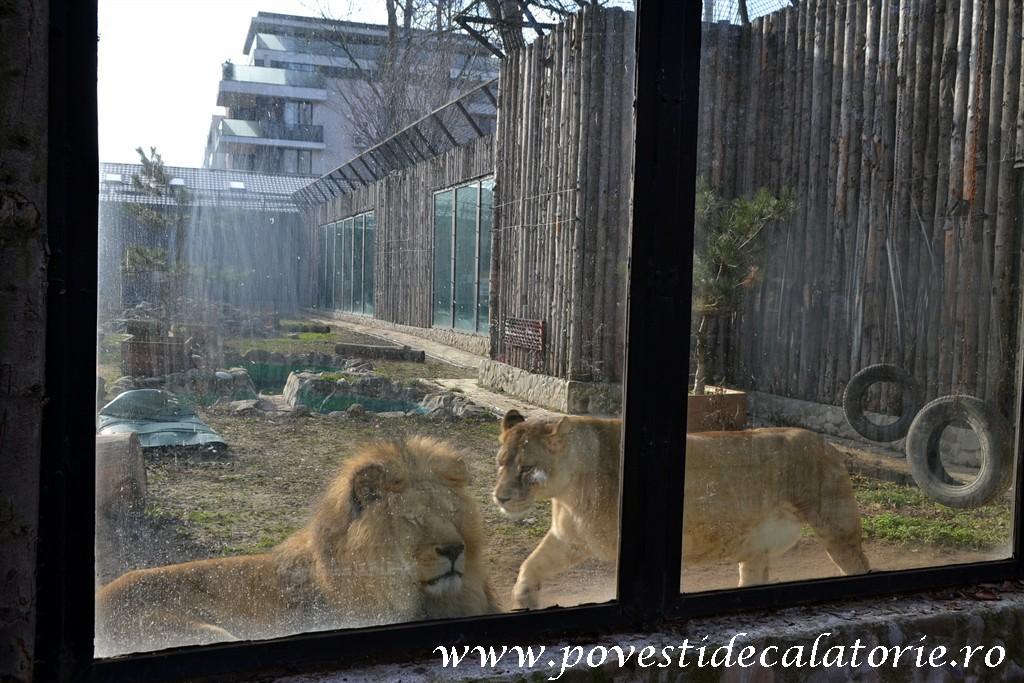 Zoo Bucuresti (10)