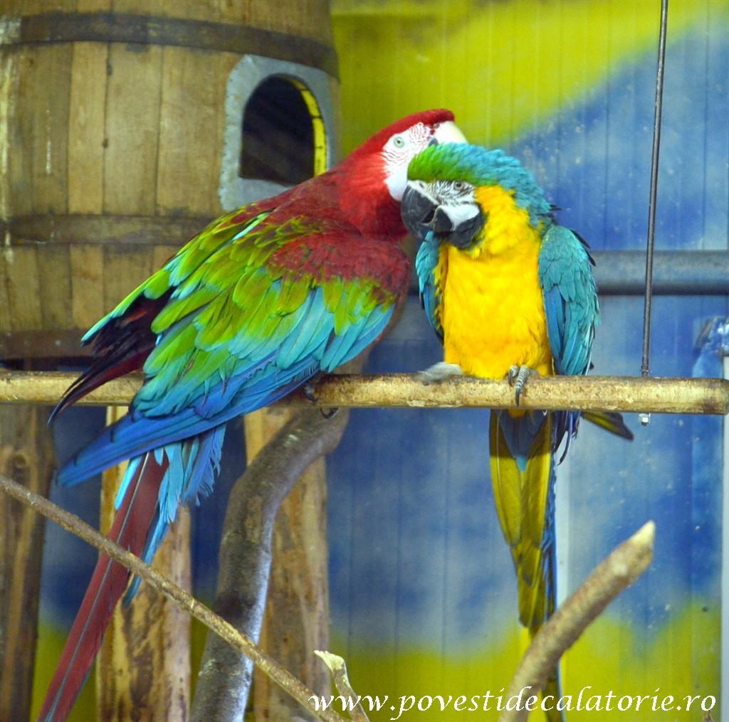 Zoo Bucuresti (131)