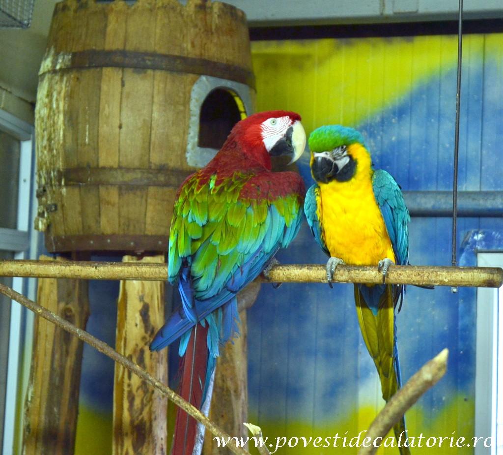Zoo Bucuresti (132)