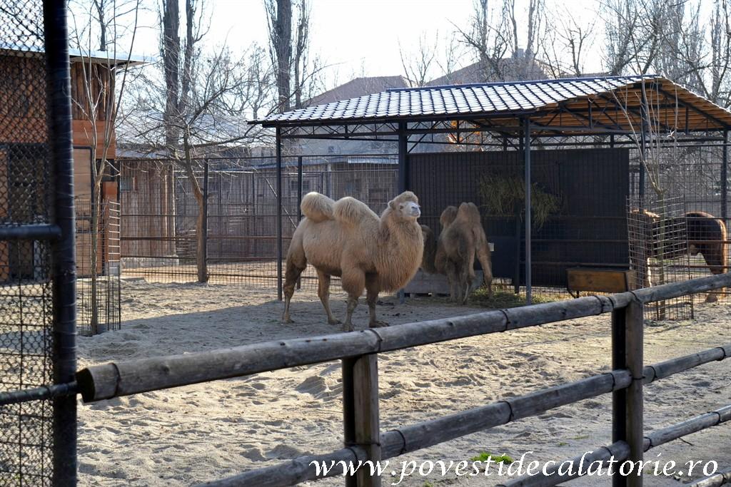 Zoo Bucuresti (149)