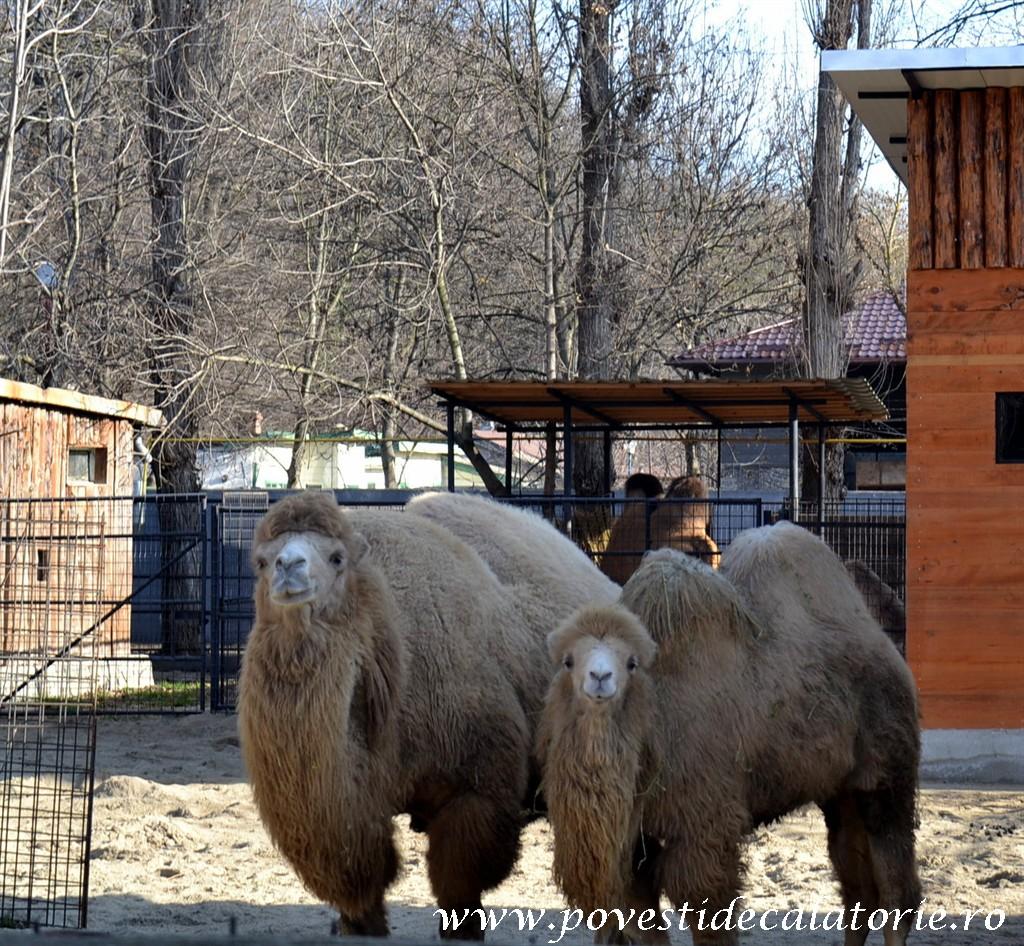 Zoo Bucuresti (153)
