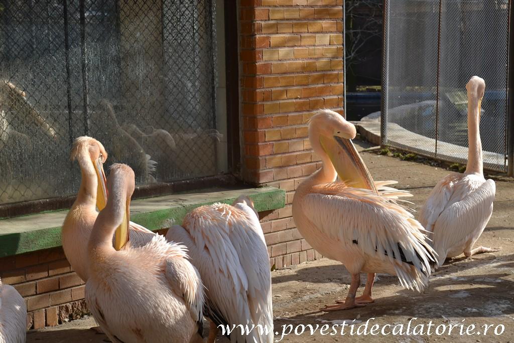 Zoo Bucuresti (206)