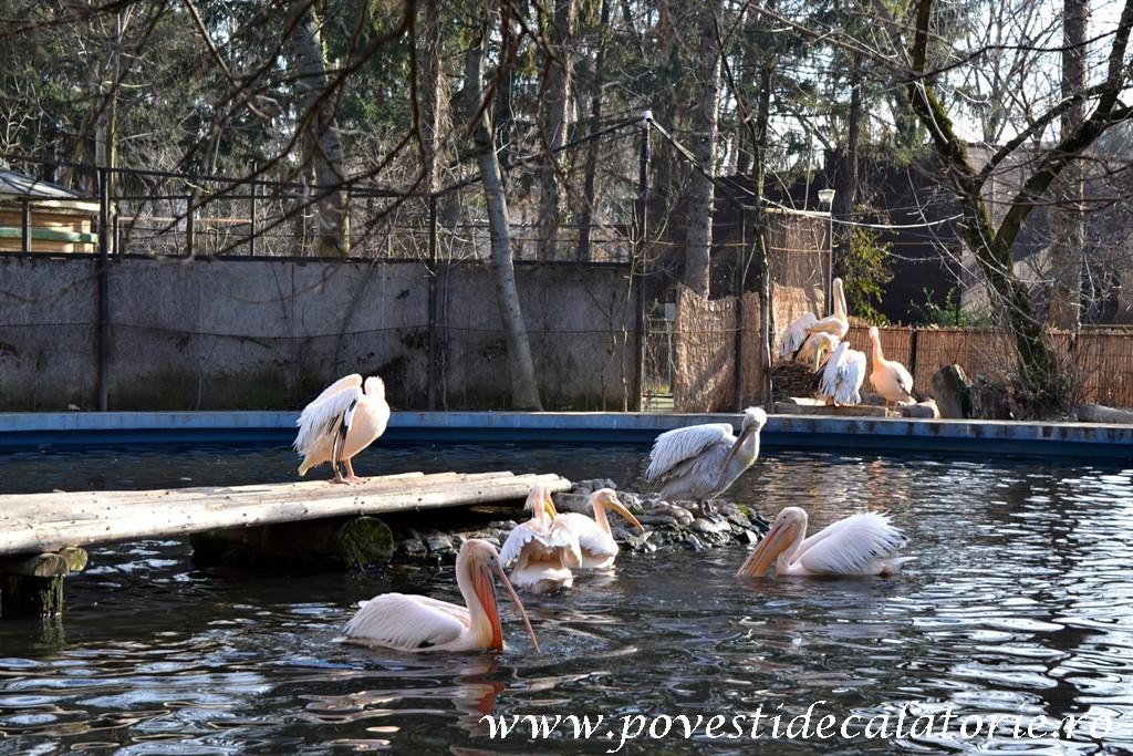 Zoo Bucuresti (214)