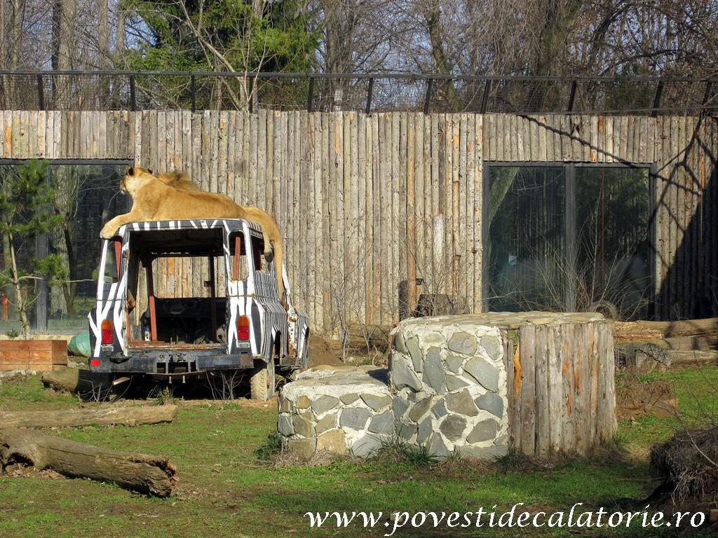 Zoo Bucuresti (316)