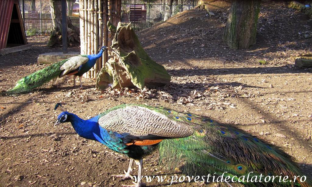 Zoo Bucuresti (322)