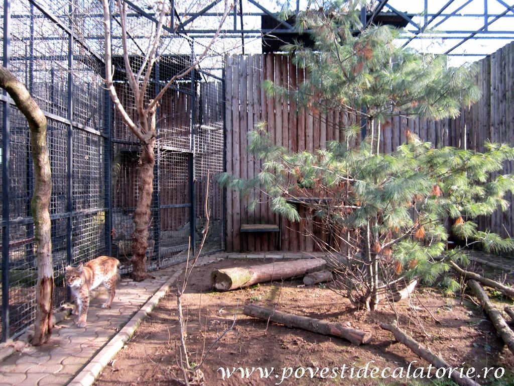 Zoo Bucuresti (330)