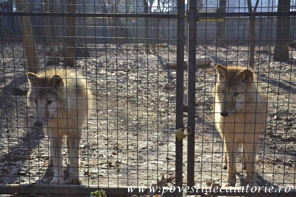 Zoo Bucuresti (63)