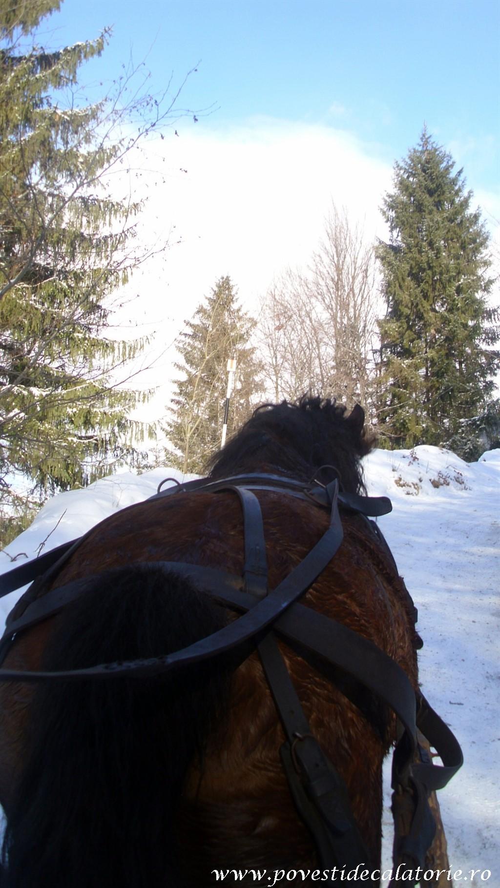 Bran (13)