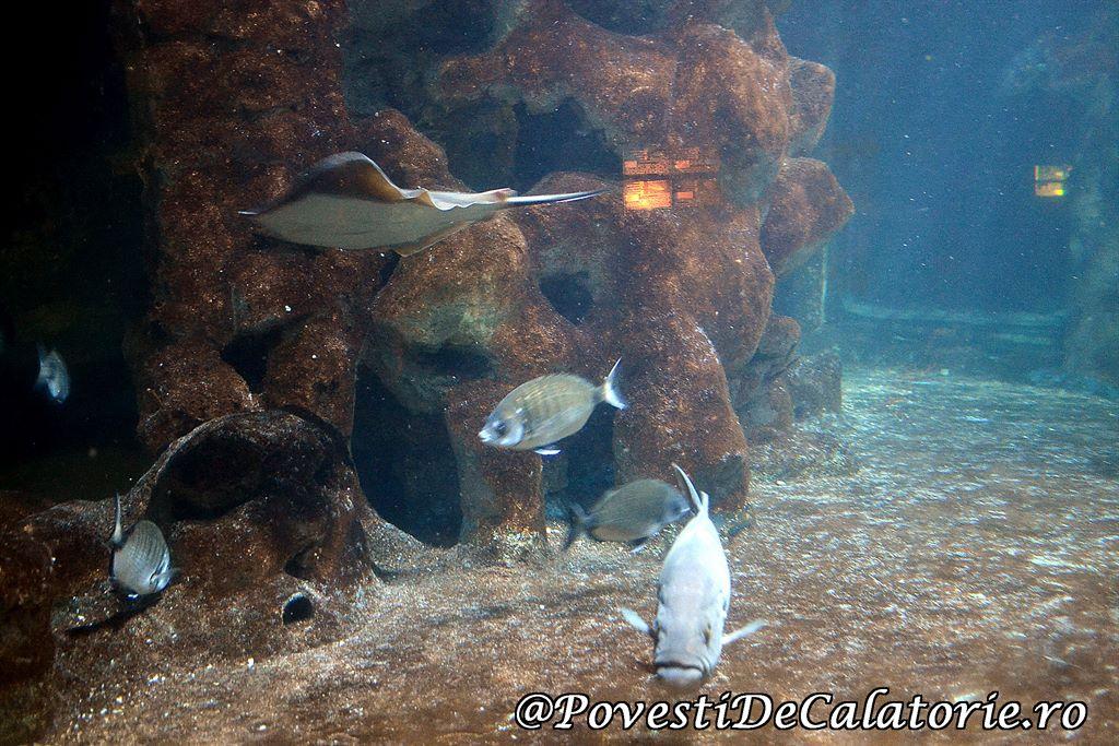 Acvariul din Rhodos (19)