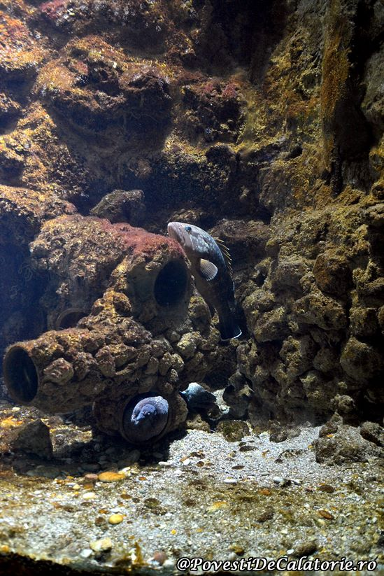 Acvariul din Rhodos (24)