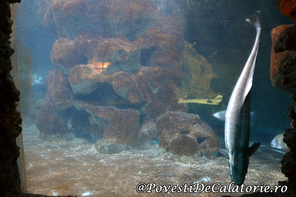 Acvariul din Rhodos (28)