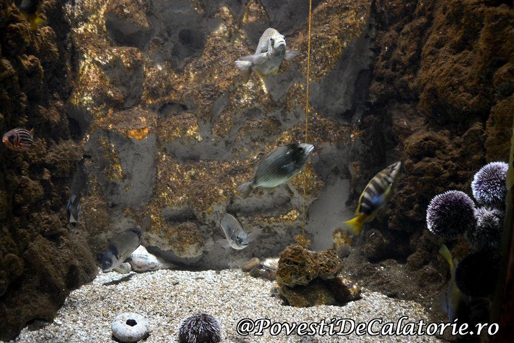 Acvariul din Rhodos (30)