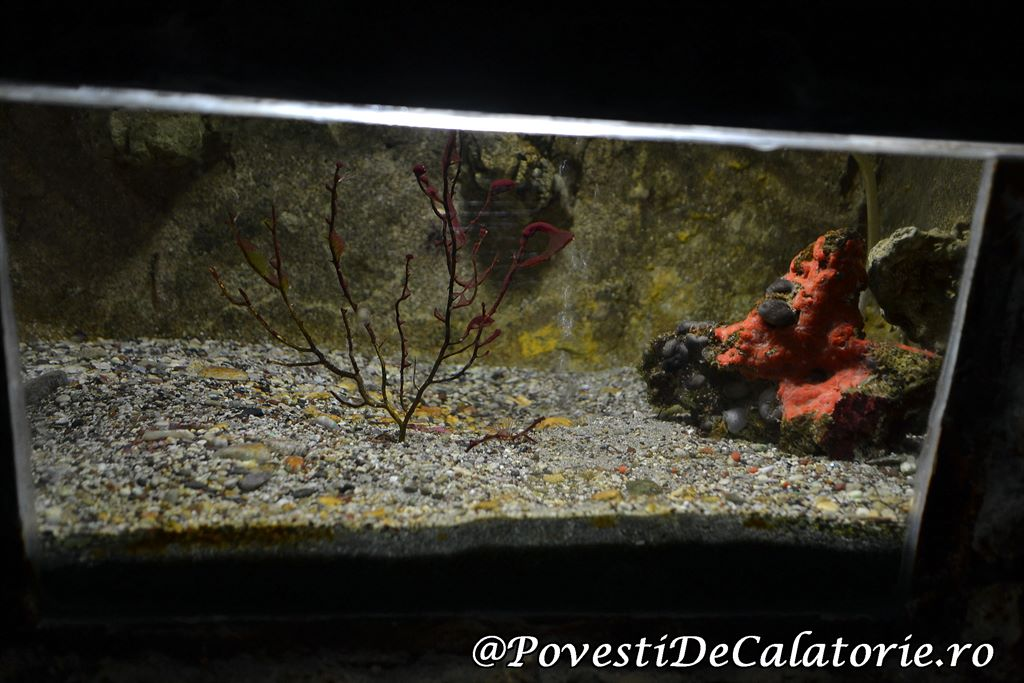 Acvariul din Rhodos (39)
