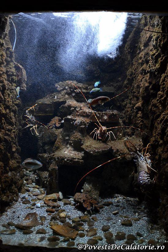 Acvariul din Rhodos (41)