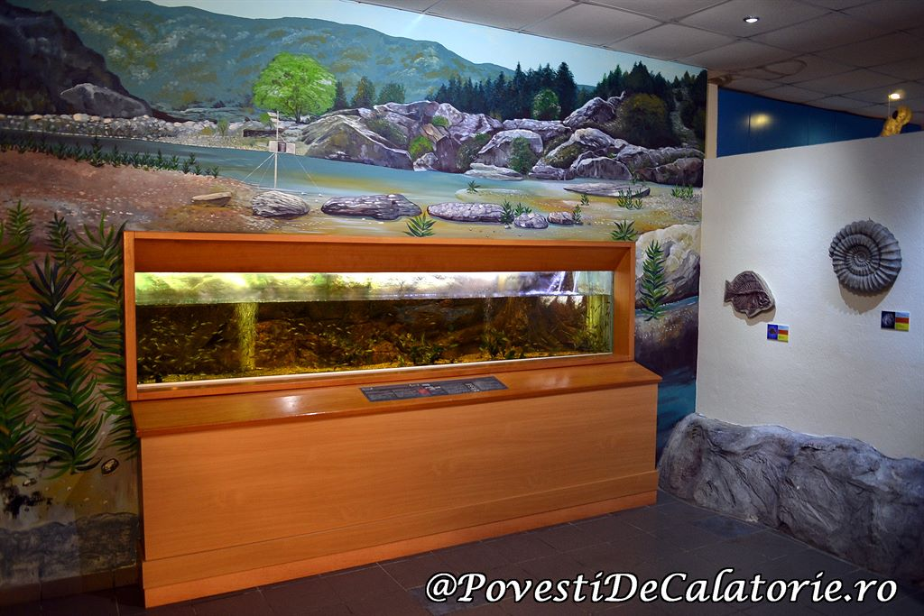 Acvariul din Rhodos (57)