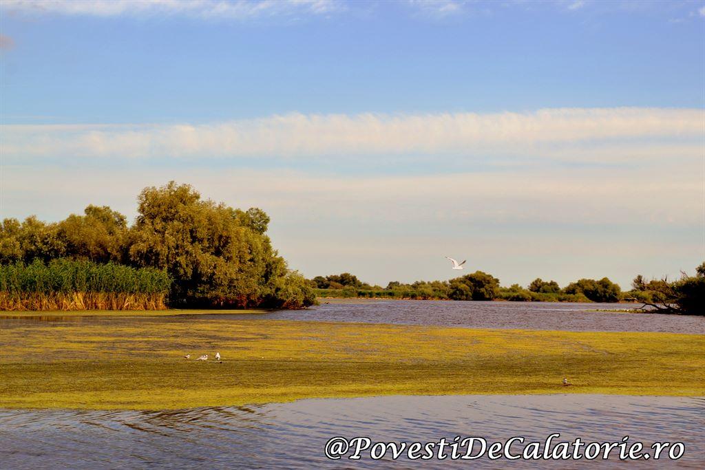 Delta Dunarii  (143)
