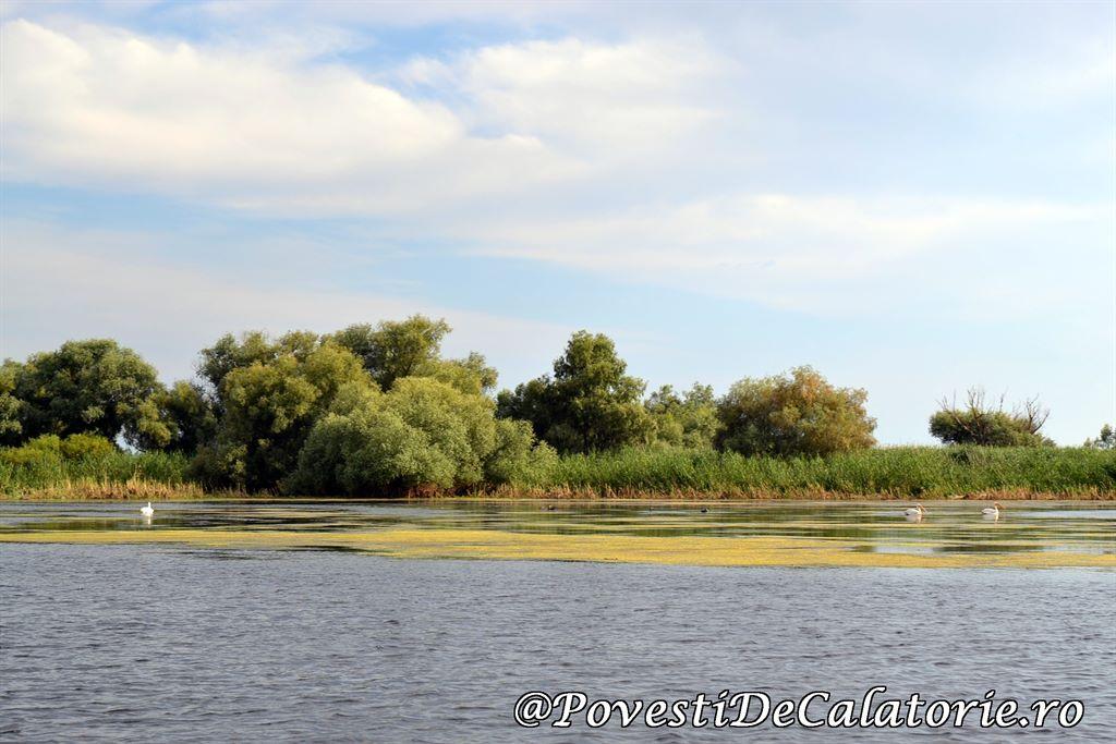 Delta Dunarii  (172)