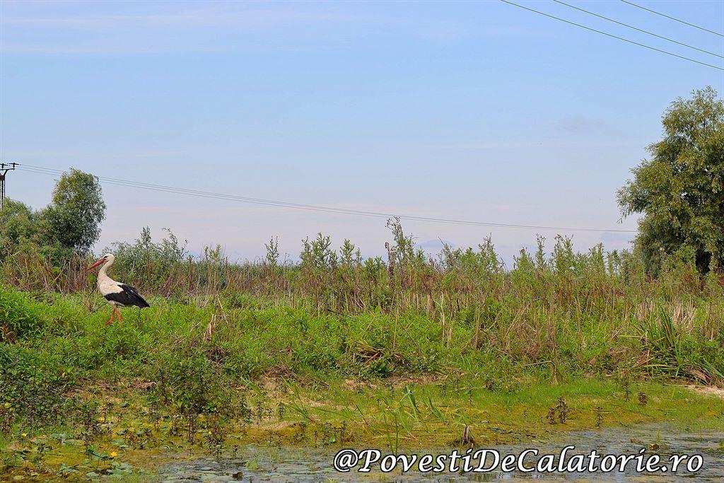 Delta Dunarii 2 (11)