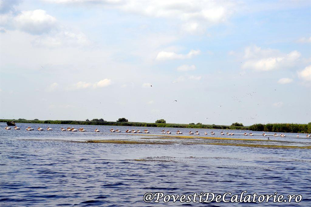 Delta Dunarii 2 (146)