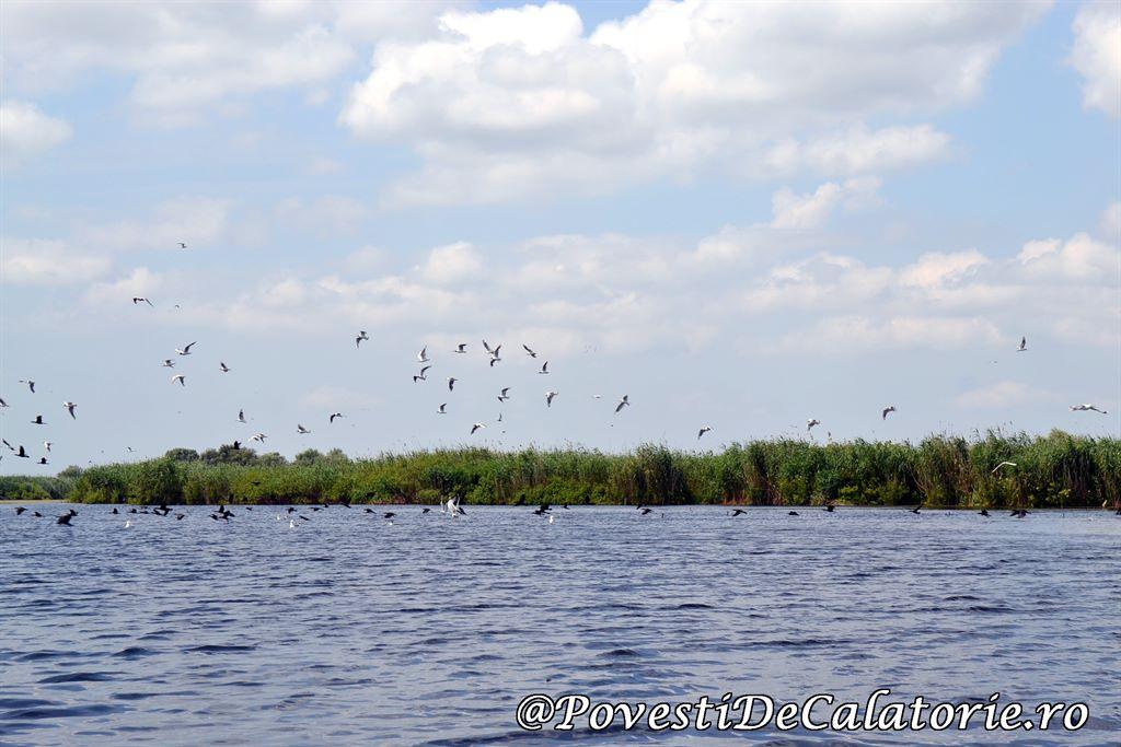 Delta Dunarii 2 (165)