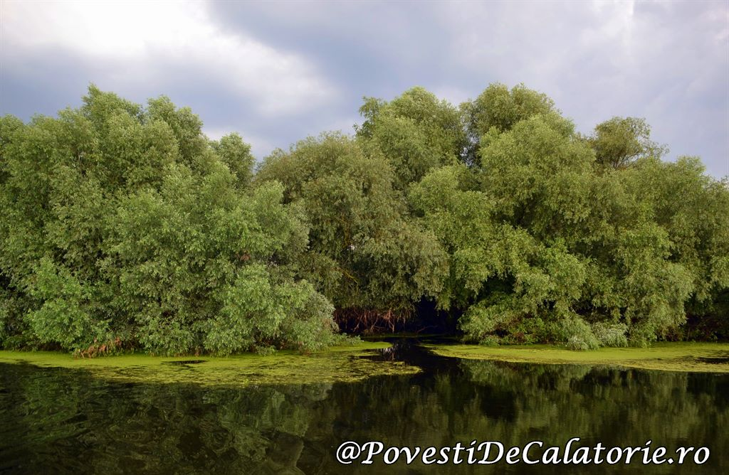 Delta Dunarii 2 (370)