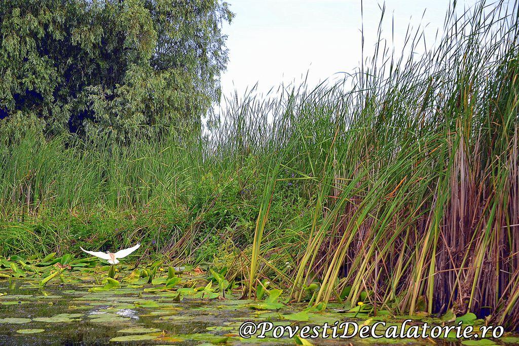 Delta Dunarii 2 (6)
