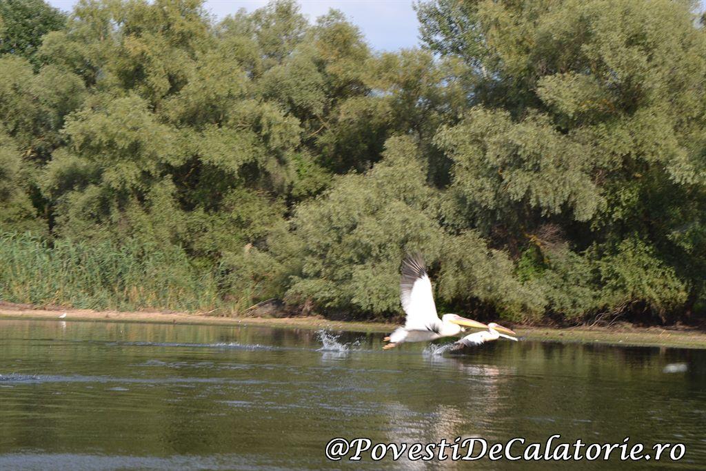 Delta Dunarii  (212)