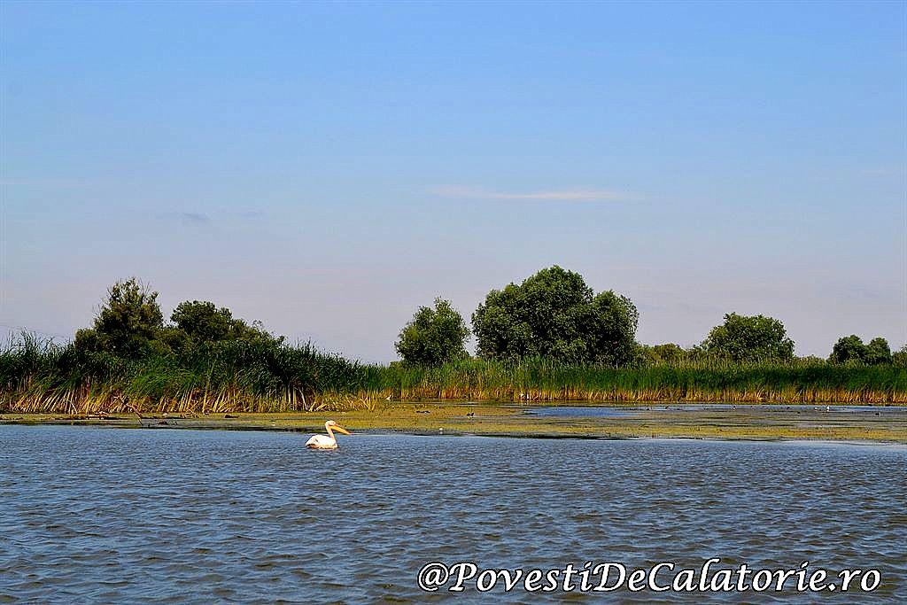 Delta Dunarii  (385)