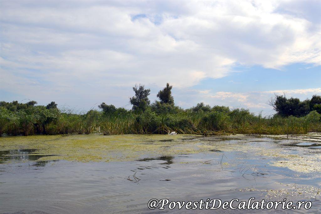 Delta Dunarii  (54)