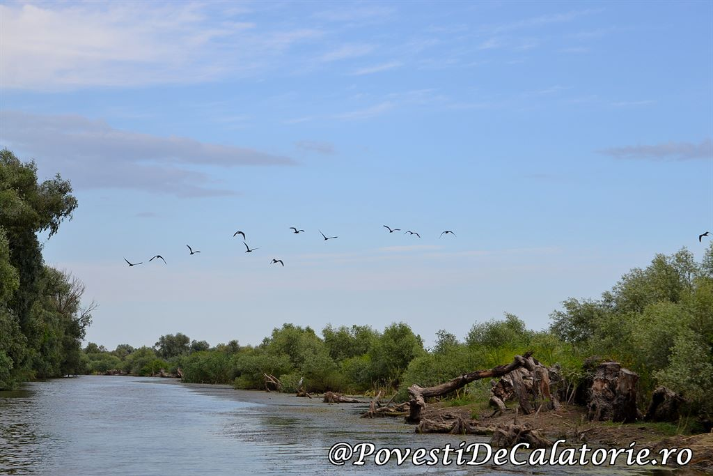 Delta Dunarii  (77)