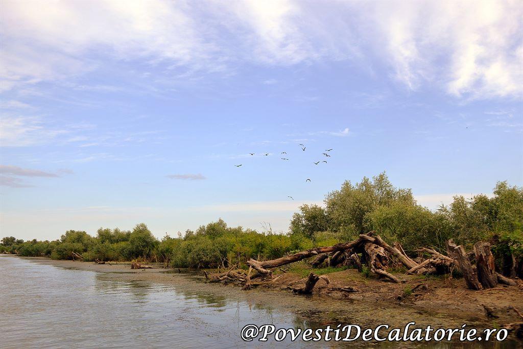 Delta Dunarii  (79)