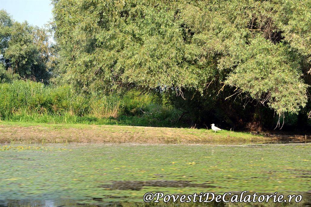 Delta Dunarii 2 (841)